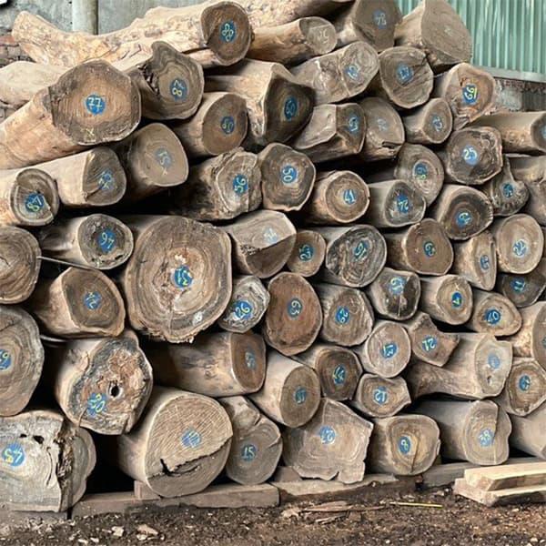 gỗ bách xanh