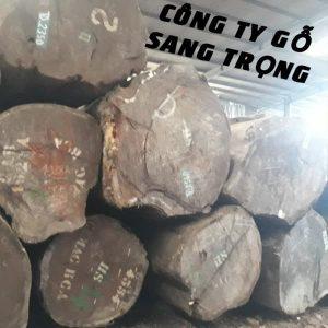 gỗ gõ pachy tròn