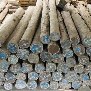 gỗ mun đuôi cong